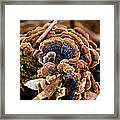 Michigan Fungus Framed Print