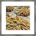 Millet Grain Framed Print
