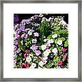 Mixed Impatiens In Dappled Shade Framed Print