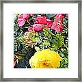Mixed Ranunculus In A Basket Framed Print