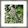 Mockingbird I Framed Print