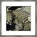 Mom And Baby Cheetah Framed Print