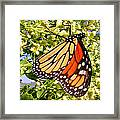 Monarch An Wildflowers Framed Print