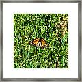 Monarch Butterfly Photograph Framed Print