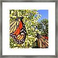 Monarch Rest I Framed Print