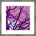 Moon Tree Pink Framed Print by First Star Art