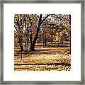 More Fall Trees Framed Print