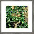 Morning Glory Garden In Provence Framed Print