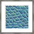 Moss Cells Framed Print