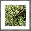 Moss Covered Tree Framed Print