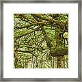 Moss-covered Trees Framed Print