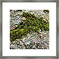 Moss In The Middle Framed Print