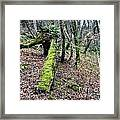Mossey Log Framed Print