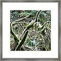 Mossy Forest Framed Print