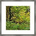 Mossy Rainforest Framed Print