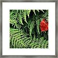 Mountain Bindweed And Fern Fronds Framed Print