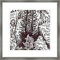 Mountain Pines And Aspen Field Sketch Framed Print