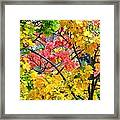 Multicolored Maple Framed Print