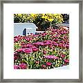 Mums At The Farm Stand Framed Print