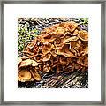 Mushroom Flower Framed Print