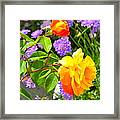 My Beautiful Roses Framed Print