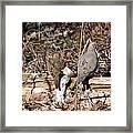 Napping Doves Framed Print