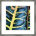 Natural Abstract 6 Framed Print