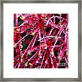 Natural Fractal Framed Print