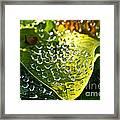 Natural Rhinestones Framed Print