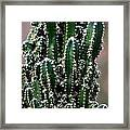 Nature's Cactus Abstract 2 Framed Print
