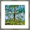 Nature's Church Windows  Framed Print