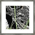 Nature's Creativity Framed Print