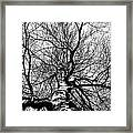 Neighbours Birch ... Framed Print