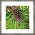 New Pine Framed Print