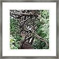New Zealand Rainfores With Pohutukawa Trees Framed Print