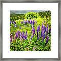 Newfoundland Meadow Framed Print by Elena Elisseeva