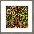 Nisqually Wildlife Refuge P12 The Maple Tree Framed Print