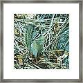Now Just Where Did I Put That Acorn Framed Print