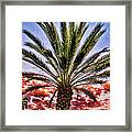Oasis Palms Framed Print