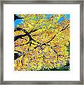 October Fall Foliage Framed Print