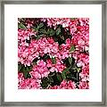Oh The Aroma Framed Print