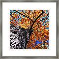 Old Elm Tree In The Fall Framed Print