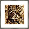 Old Rusty Door Framed Print