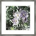 Old Style Flower 7 Framed Print
