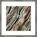 Old Wood And Lichen Framed Print