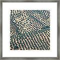 Olive Groves, Andalusia, Southern Spain. Framed Print
