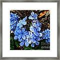 On The Forest Floor Framed Print by Julie Dant