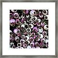 Onion Power Framed Print