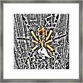 Orb Spider Framed Print