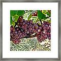 Oregon Burgundy Framed Print